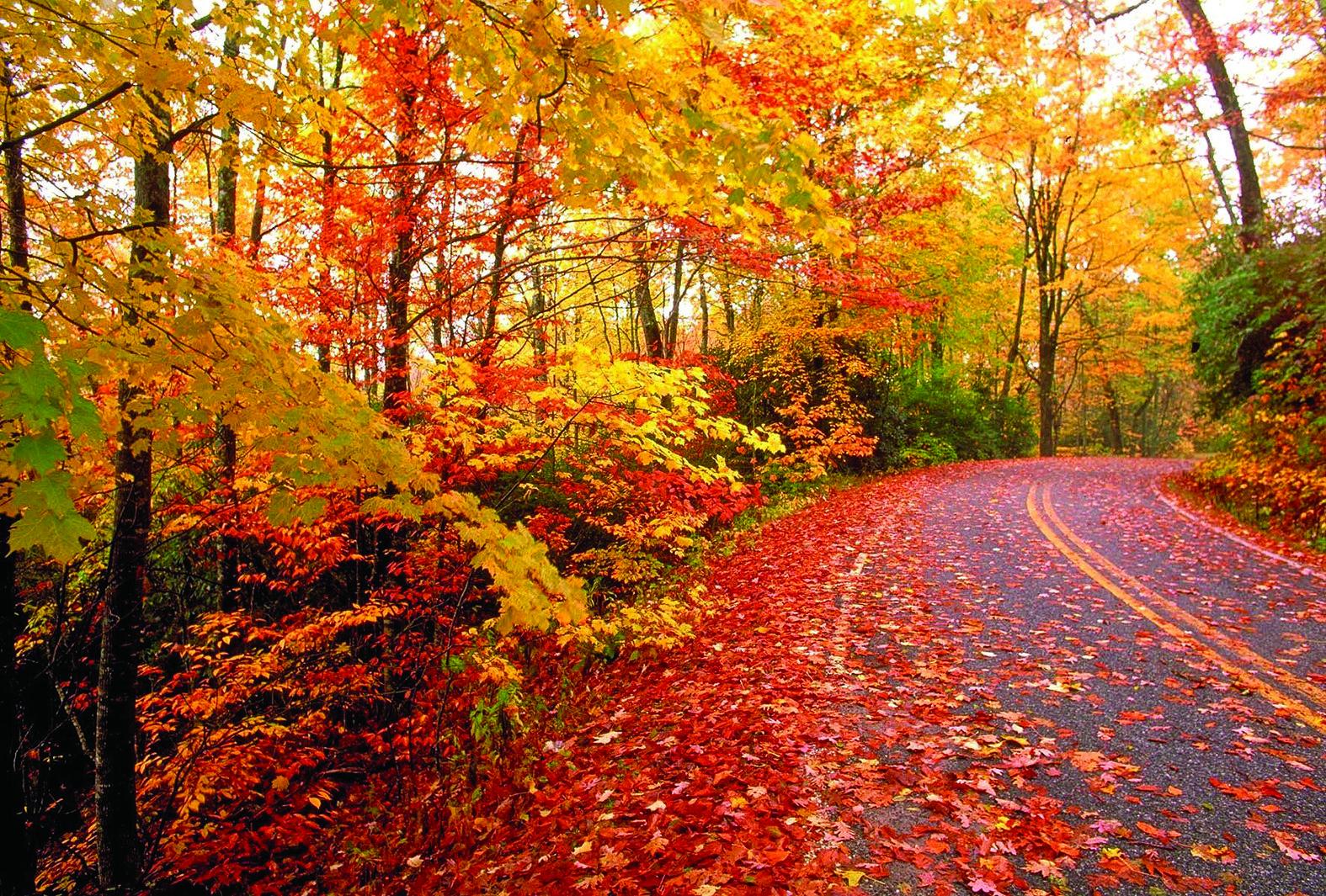 أوراق كبحر من الألوان عندما تستعد الأشجار لفصل الشتاء Sadaalwatan