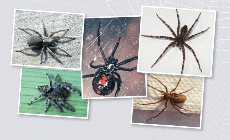 عناكب مخيفة يمكن أن تعترضك في ميشيغن