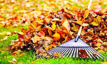 إزالة أوراق الأشجار المتساقطة في ديربورن ابتداء من الأسبوع القادم