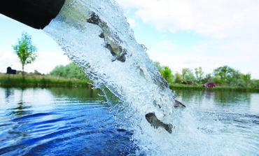 ضخ ٢١ مليون سمكة في مياه ميشيغن هذا العام