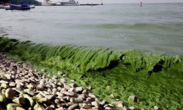 غزارة أمطار الربيع تهدد بانتشار كثيف للطحالب هذا الصيف