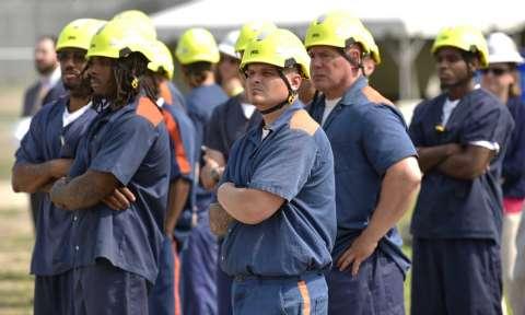 تدريب سجناء ميشيغن على تشذيب الأشجار