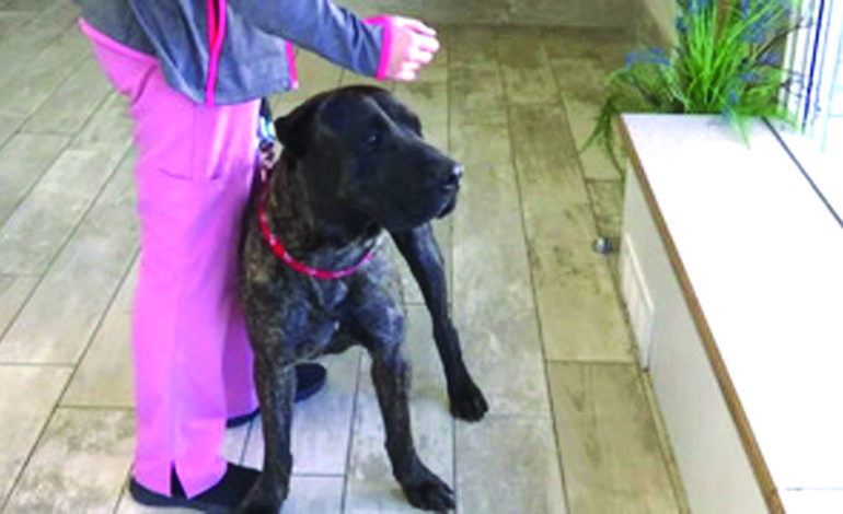 العثور على كلب فُقد في فلوريدا وظهر في ميشيغن