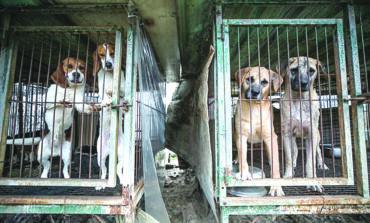 بسبب شحّ اللحوم.. زعيم كوريا الشمالية يصادر الكلاب الأليفة