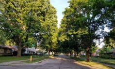 ديربورن تحافظ على تصنيفها كـ«مدينة أشجار» للعام 33 على التوالي