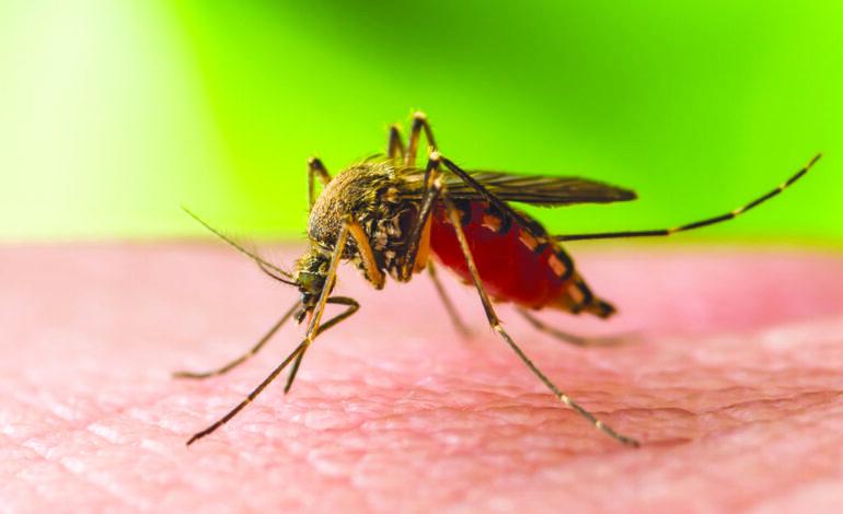 تحذير حكومي من لدغات البعوض بعد رصد أولى الإصابات الحيوانية بفيروس غرب النيل في ميشيغن
