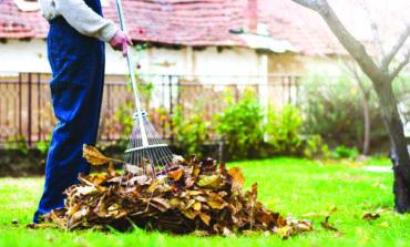 ثلاث نصائح للتخلص من أوراق الخريف